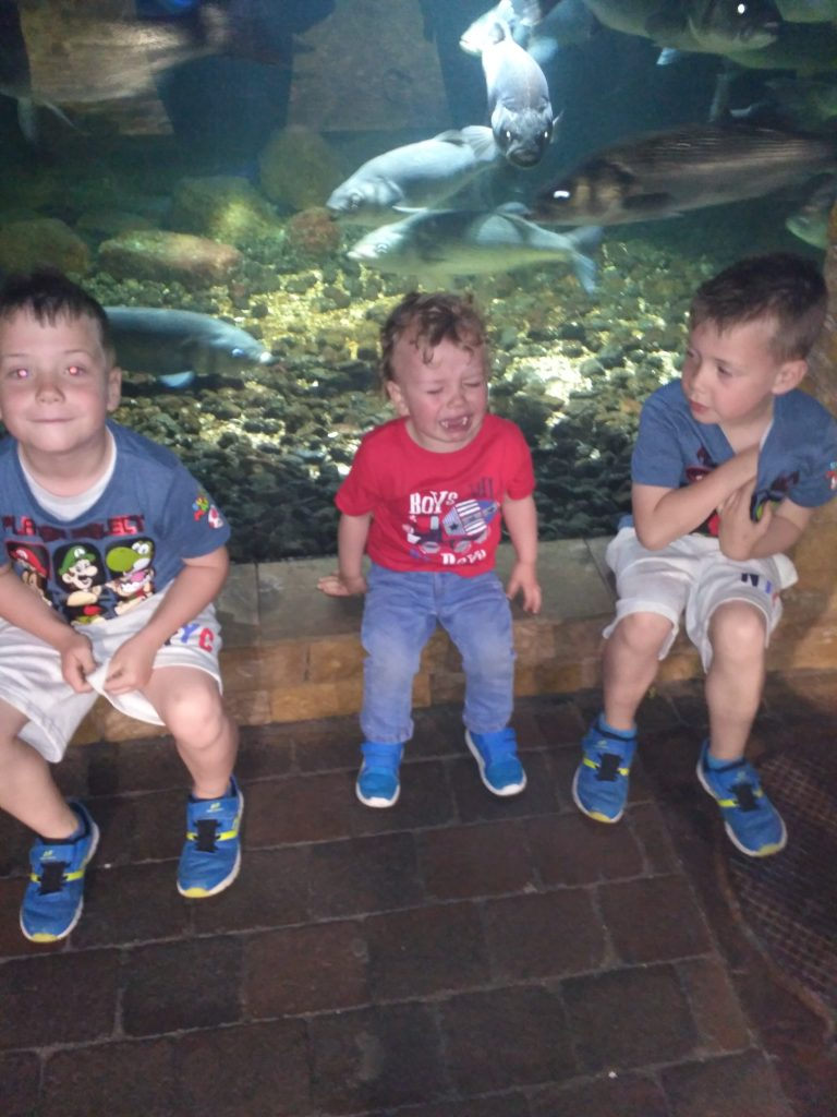 3 boys, twins, crying toddler, aquarium, brothers, smilng